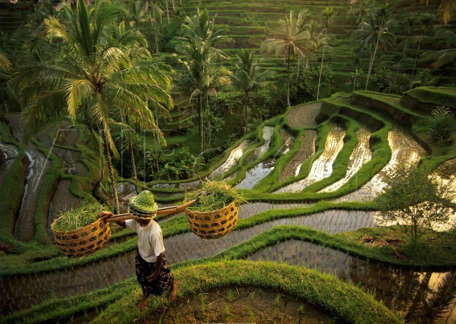 Embrace Bali's Culture